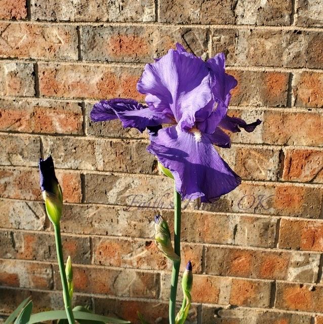 Homestead Flowers