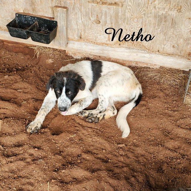Netho Deep Fork – Karakachan LGD